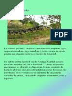 Culebra Ratonera Mica