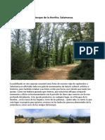 Bosque de La Honfria y El Viejo Castaño.pdf 2