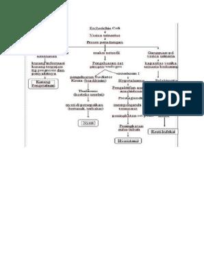 patofisiologi prostatitis Prostatitis sürgősségi segítség
