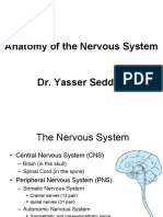 Anatomy of the Nervous System -222