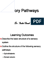 Sensory System- Pathways(2)