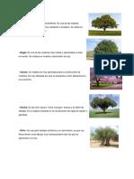 ARBOLES MADERA Y ARBOLES FRUTALES 10.docx