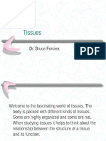 Human Tissue Identification Powerpoint (Chapter 4)