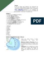 Adjetivos Calificativos,Partes Fundamentales de La Célula