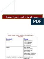 507 Wheat Pests