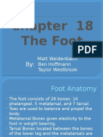 Ch.18 The Foot.pptx