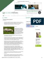 Crianza de Cerdos en Pastoreo - El Sitio Porcino