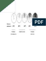 Cuantificacion de Bacterias Para Urocultivo