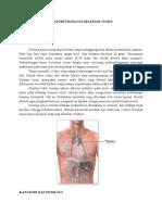 Anatomi Fisiologi Kelenjar Tymus