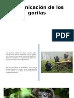 Comunicación de Los Gorilas