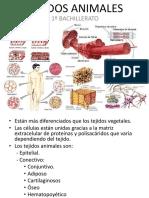 tejidosanimales-111114151140-phpapp01
