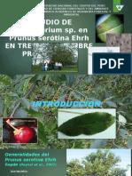 Final Diapositivas
