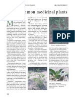 Seven Common Medicinal Plants