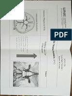 anatomia dtc
