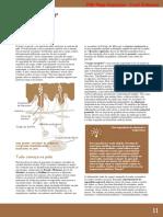 Tato_Dor_Receptores.pdf