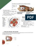 Fisiología y anatomía ocular (motilidad)