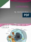 NUTRIENTES-04