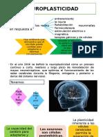 Neuroplasticidad Concepto, Historia y Evolución