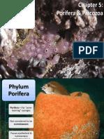 - Porifera & Placozoa 2012