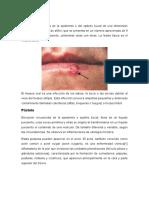 Patología Castillo Corregido