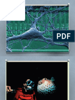 Biological Perspective of Behavior Psych 1