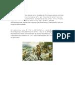 pitecantrópidos