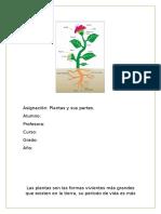 PLANTAS Y SUS PARTES