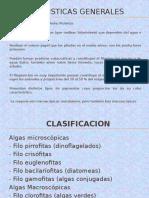Caracteristicasyclasificaciondealgas