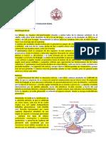 Apunte 1 estructura y función renal