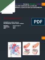 Antihipertensivos Unitepc Farmacologia