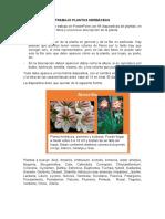 Trabajo Plantas Herbáceas