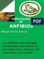 Anfibios I