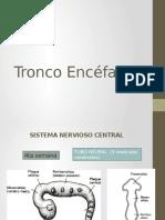 tronco encefalico embriologia