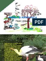 317431883 Barza Si Randunica