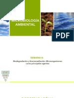 Semana 8 - Conceptos de Biodegradacion
