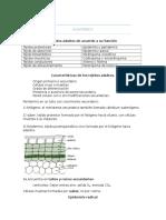 Anatomía Vegetal.docx