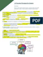 Estrutura E Funções Principais Do Cérebro