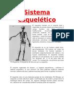 Anatomia Sitema Esqueletico