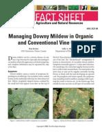 Managing Downy Mildew in Organic Vineyards