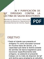 c..Obtención y Purificación de Igy Dirigidas Contra La
