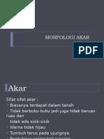 Materi Sap 3 (Morfologi Akar)