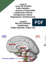Leccion 20 22 Tronco del encefalo Nervios craneales.pdf