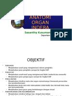 Anatomi Organ Indera