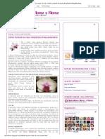 Floricultura Flores e Flores_ Como Cuidar Da Sua Orquídea Phalaenopsis