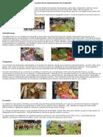 Economía de Los Departamentos de Guatemala
