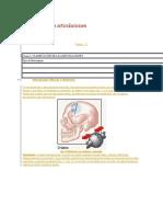 histología-de-las-articulaciones.docx