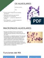 MACROFAGOS ALVEOLARES