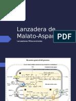 1. Lanzadera de Malato-Aspartato