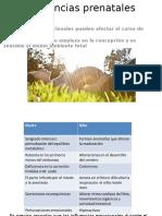 Influencias Prenatales Medidas Para Favorecer La Mutualidad y Atributos de La Actividad Mentalprimaria