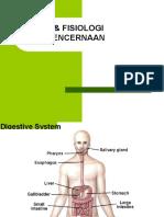 anatomi-fisiologi-pencernaan